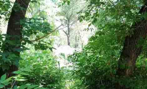 Лось прячется в засаде