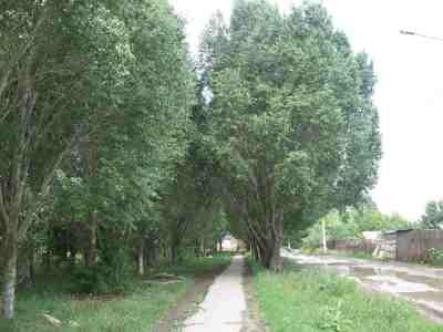 поселковые аллеи для прогулок