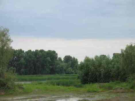 здешний вид на протоки реки Самара