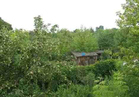 на месте дальних садов - полузаброшенные дачи
