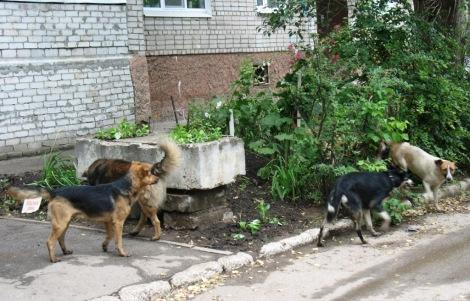 Самара ул. Гродненская