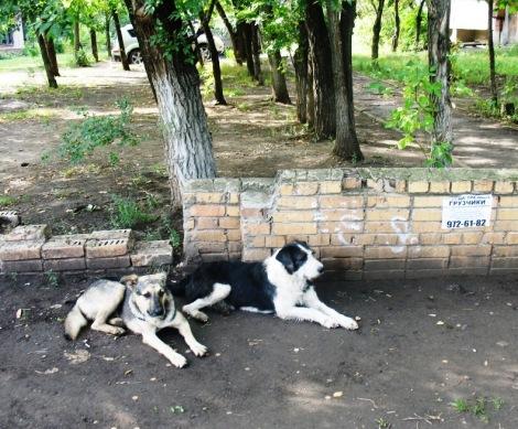 Самара ул. Аэродромная