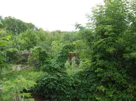 заросшие сады и огороды в конце территории ББВ Водоканала