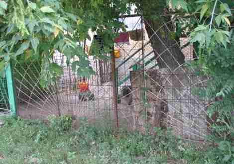 огороженные участки у муниципальных домов охраняют свирепые волкодавы