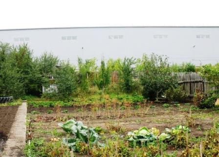 зато капуста рядом с домом растет