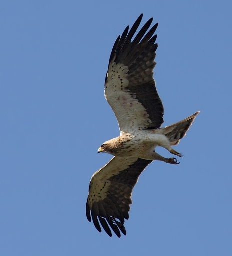 Фото птиц самара