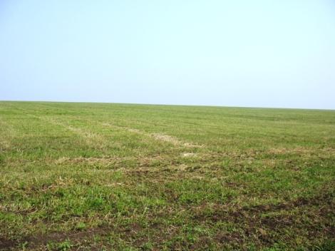 обработанные поля