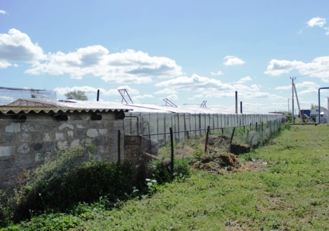 после посещения этой теплицы в Кинель-Черкассах губернатор принял решение частично дотировать оплату за газ тепличникам