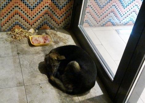 собаку решили накормить от всей души