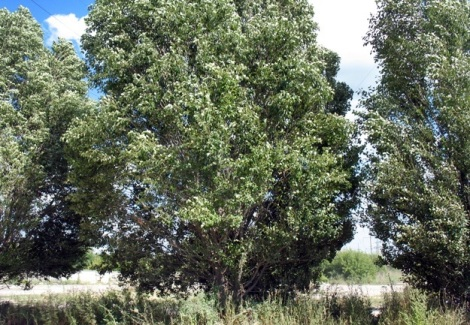 эти деревья пережили Суркова