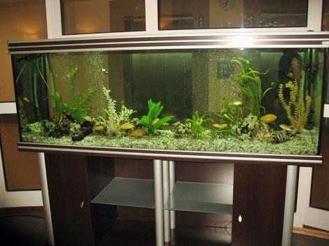 за аквариумами ухаживают и возле них всегда полно людей